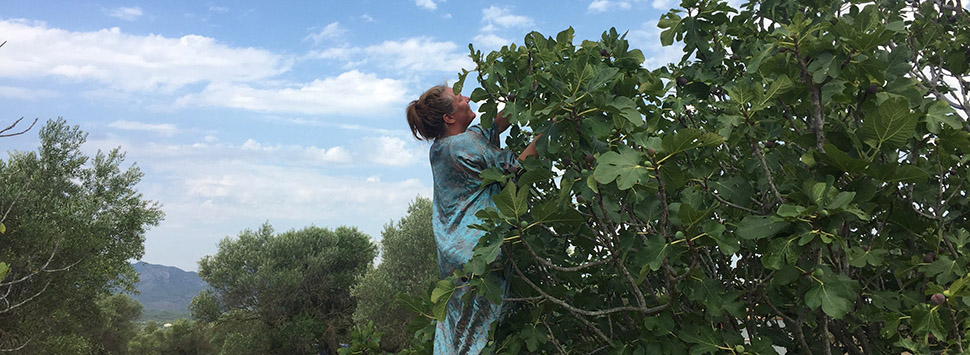 Finca Feliz - picking figs on a ladder