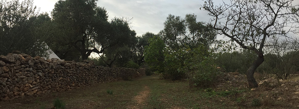Finca Feliz - A little trail starts to appear from the house to the cisterna